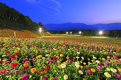 ヨドバシカメラ協賛 花の里 フォトコンテスト